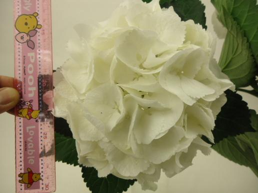 20130412kusa2.JPGのサムネイル画像