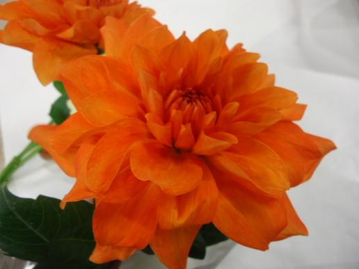 アマノオレンジ.JPG