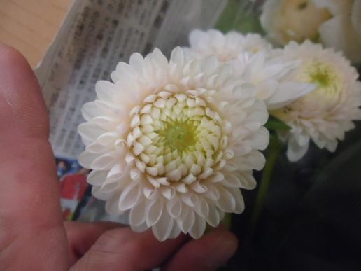 紀子エリザベスハメット.JPG