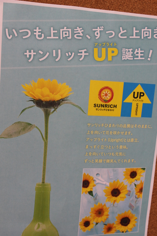 ひまわりUP 006.jpg