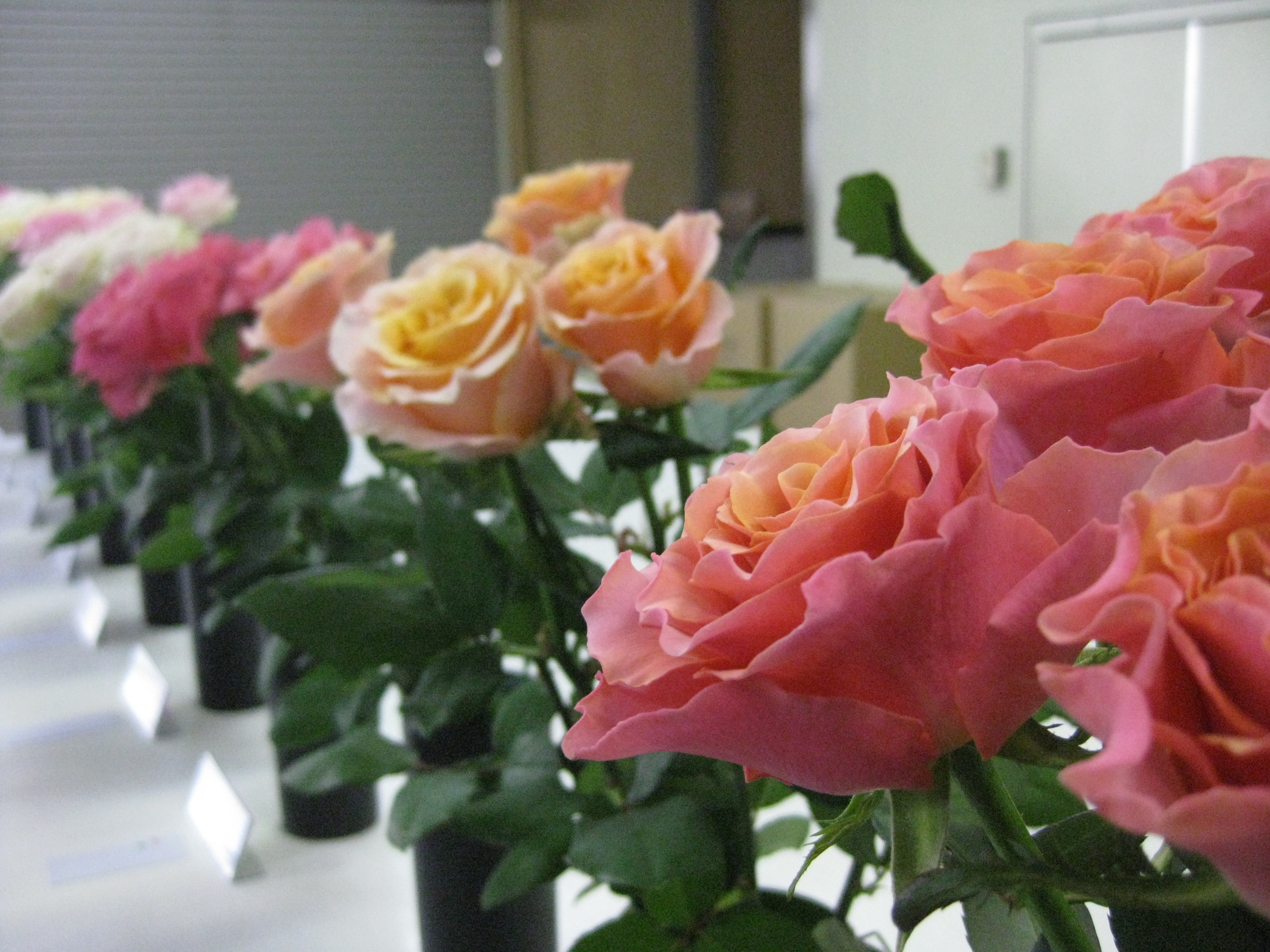 http://flore21.com/contents/ota/IMG_0512.JPG