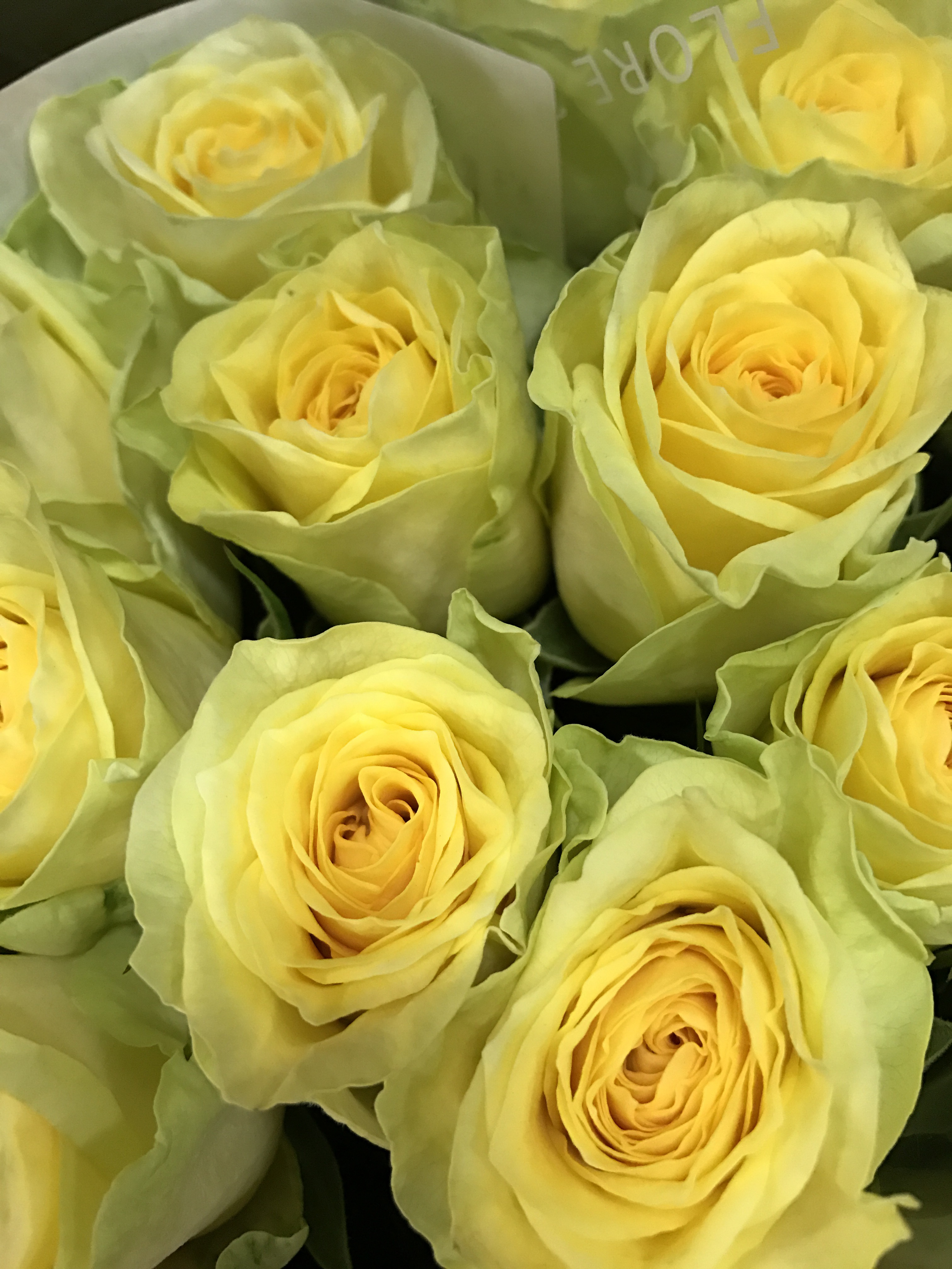 http://flore21.com/contents/ota/IMG_4220.JPG