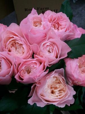 2012-11-26 06.06.02.jpgのサムネイル画像のサムネイル画像