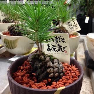 盆栽.jpgのサムネイル画像