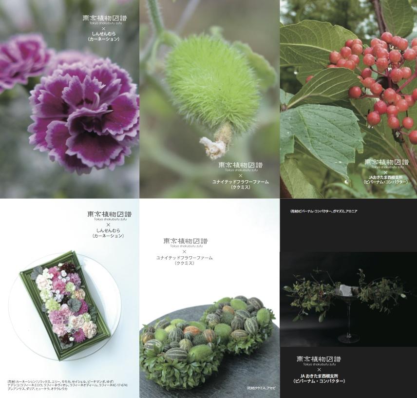 http://flore21.com/contents/zufu/zufu_4rd_8_B6.jpg